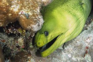 eel-florida-camp