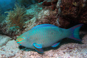 fish-camp-florida