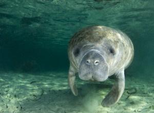 Florida Marine Life