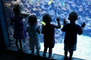 Kids at aquarium looking into fish tank