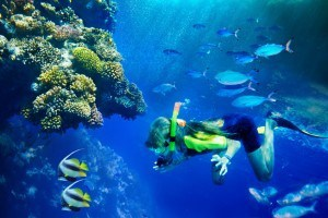 Group of coral fish in blue water with scuba diver.