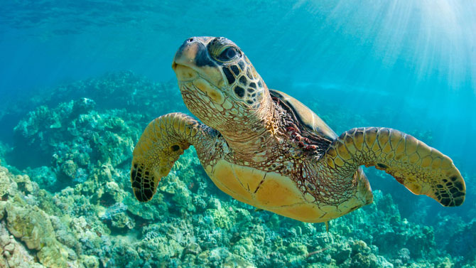 6 Cool Facts About Sea Turtles for Kids