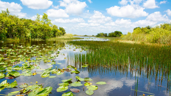 7 Interesting Facts About the Florida Everglades for Kids